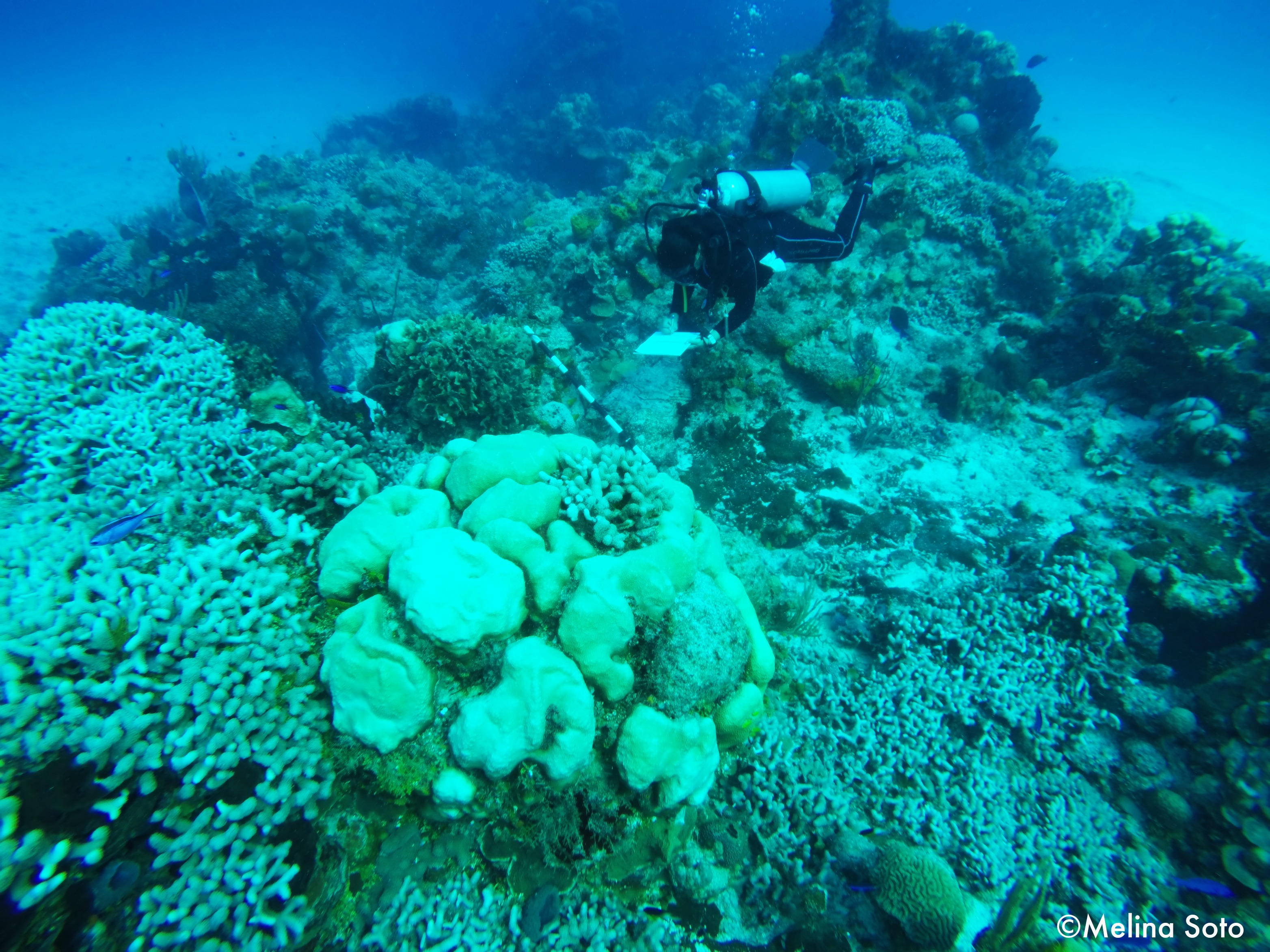 5_Climate change induce warming of the ocean's temperature impact the reefs of the world, coral bleaching has been reported in the Mesoamerican Reef every year since 2015.