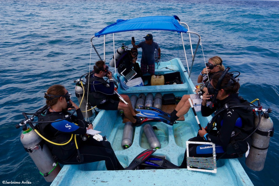 8_A team of divers getting ready to monitor the reef.
