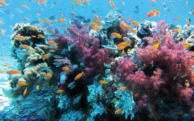 Replan(t) coral reefs' future