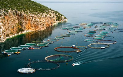 Aquaculture: Challenges on the road to sustainability