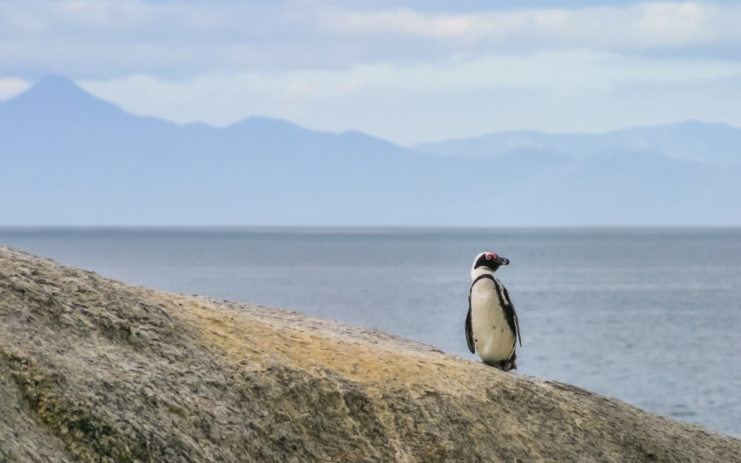 """Life on the edge: What it means to be an """"endangered species"""""""